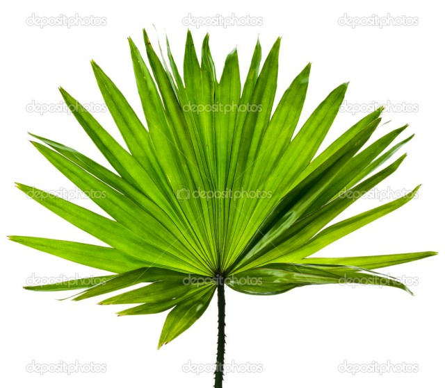 La boi (palm leaf)